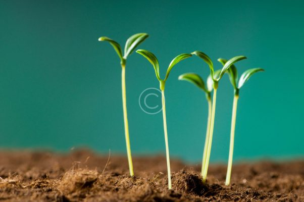 bigstock-Green-seedling-illustrating-co-14319230-scaled.jpg